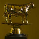The Golden Bull trophy
